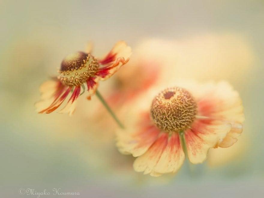 عکاسی به سبک ماکرو از گلها