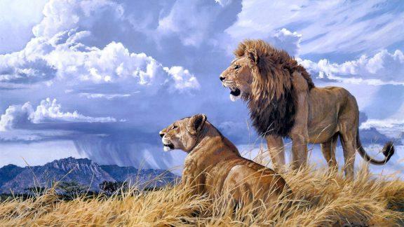 عاشقانهترین حیوانات جهان