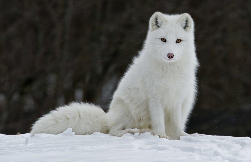 زیباترین حیوانات ماده