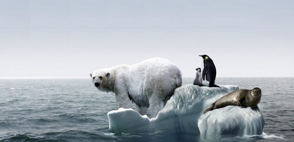 خطر انقراض