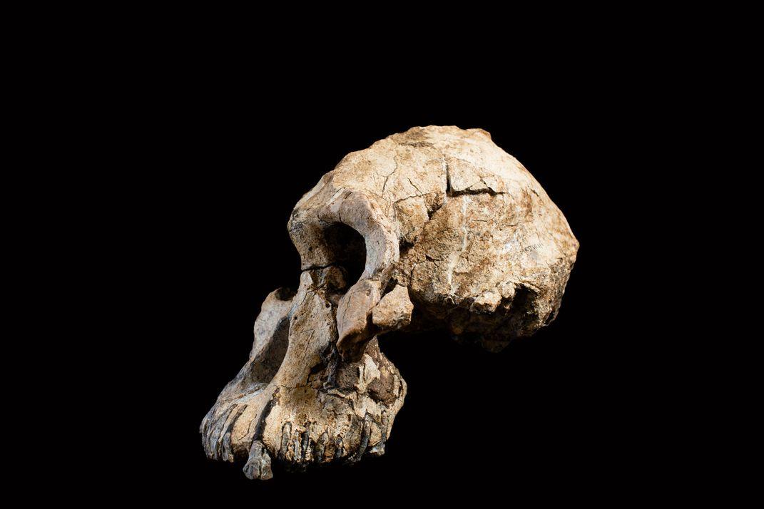 نیمرخ جمجمه 3.8 میلیون ساله