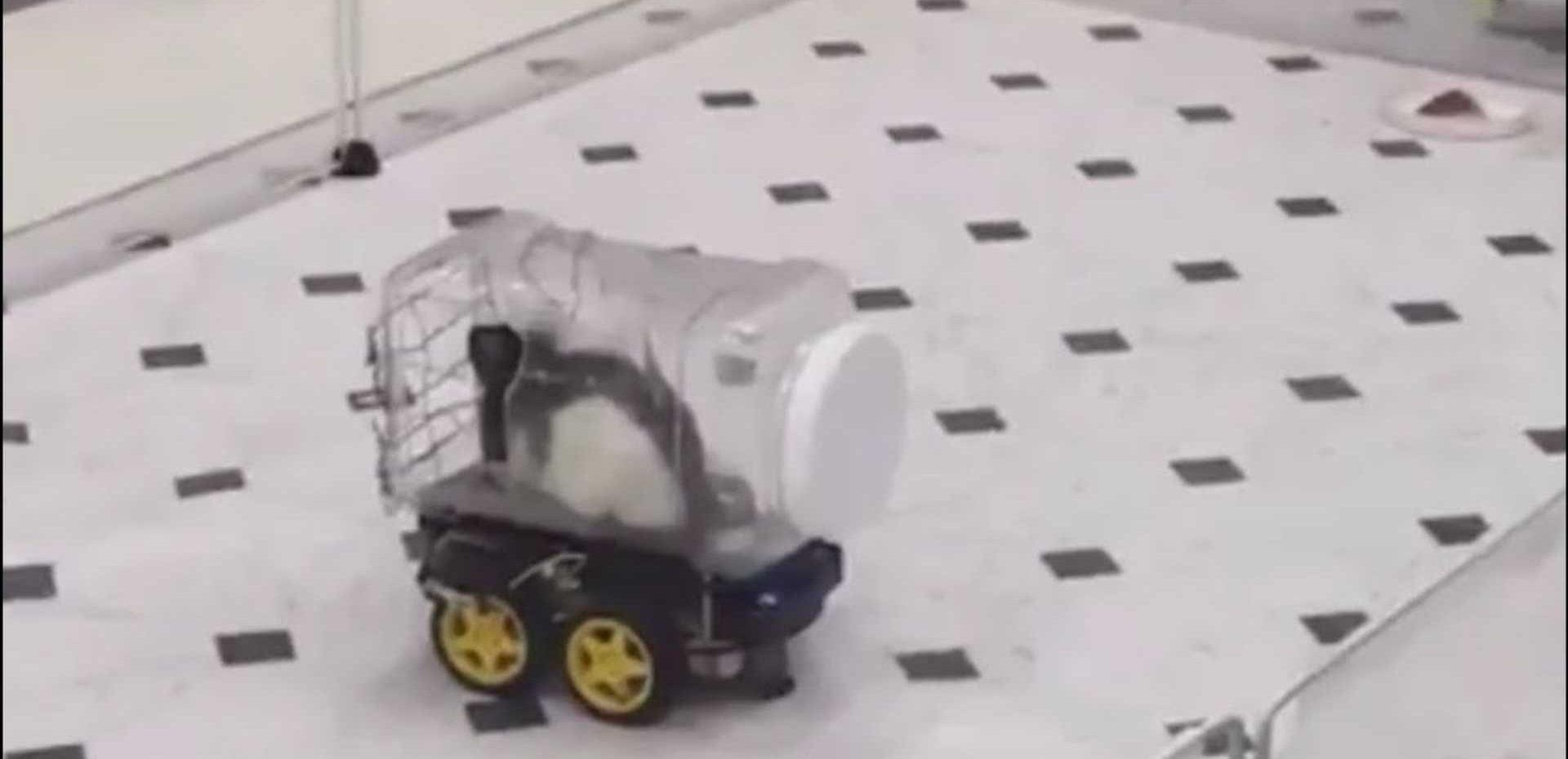 رانندگی موشها