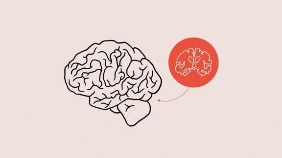 بیشتر اجتماعی شوید: نتایج جدید ارتباط کوچک شدن مغز و تنهایی طولانی مدت را نشان میدهد