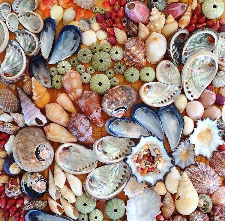 تفاوت صدف دوکفهای و گوش ماهی