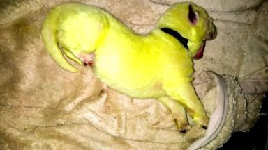 توله سگ سبز رنگ