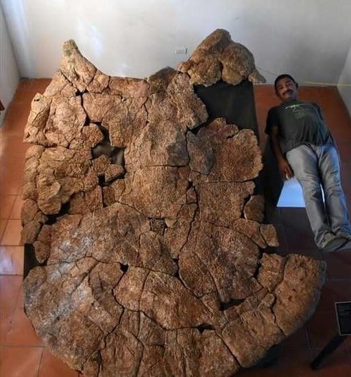 کشف فسیلهای لاکپشت غولپیکر به بزرگی یک خودرو سواری سدان