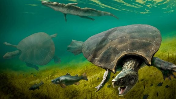 کشف فسیلهای لاکپشت غولپیکر