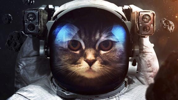 10 مورد از جالبترین ویژگی گربهها