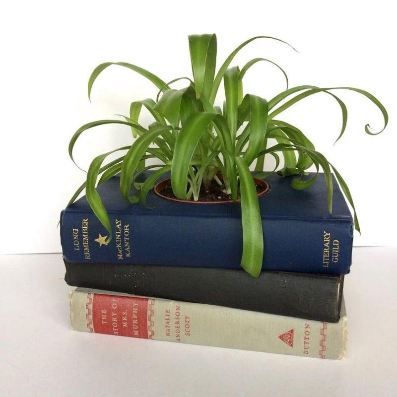 10 وسیله کاربردی قابل بازیافت - گلدان